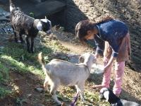 Pavasaris Indijā - 2011